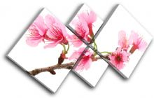 Cherry Blossoms Floral - 13-1138(00B)-MP19-LO